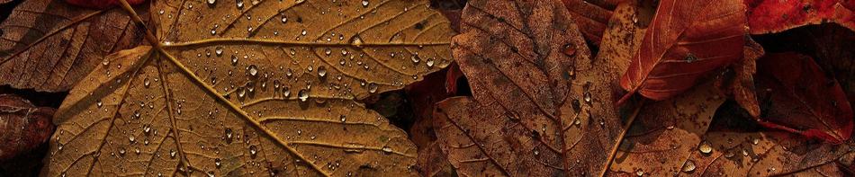 Lectures d'automne